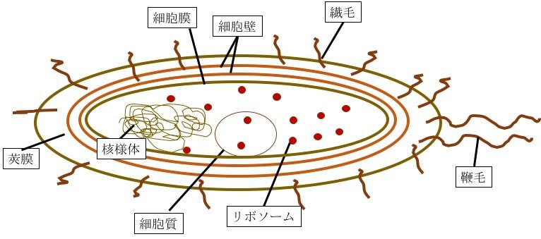 細菌 図1