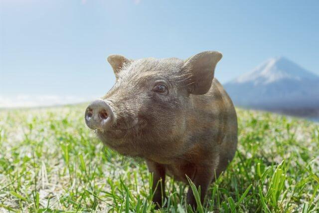 猪毛 イメージ図