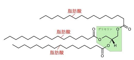 油脂の構成成分トリアシルグリセロール 説明の図